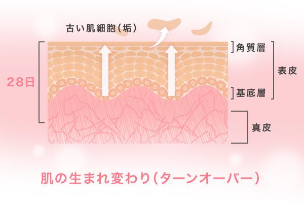自己美肌力×幹細胞研究|肌自身が持つ力を、美しい素肌につなげる。【日本メナード化粧品】